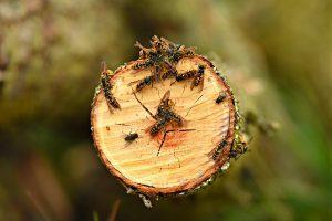 Le vespe: qual è il pericolo, e come gestirlo