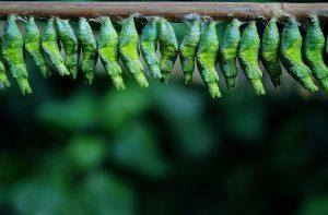 Uomo contro insetto: la disinfestazione