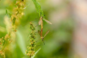 Col caldo arrivano le zanzare: ecco come scegliere la protezione migliore